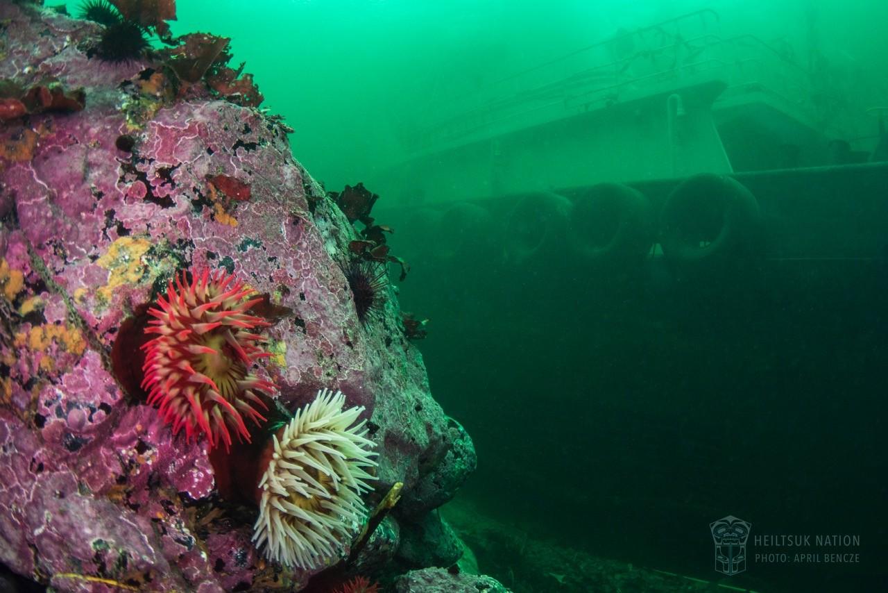 Oct24.NathanEStewart.Underwater.HeiltsukNation.02